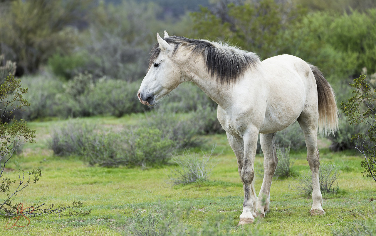 20170219_SaltRiver_Horses_WILDHORSE.jpg