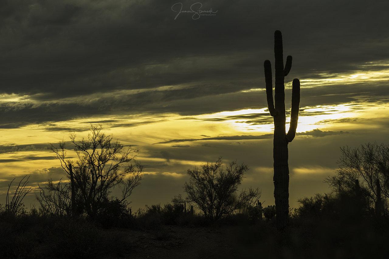 SonoranDesert.jpg