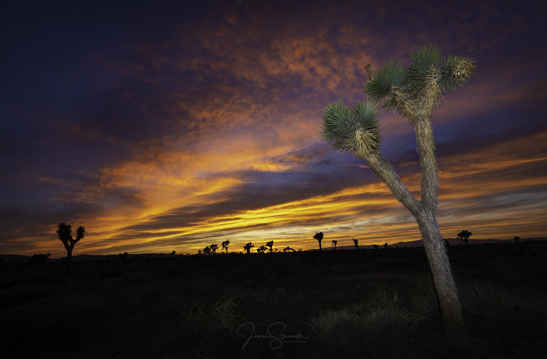 20180421_AV_Sunset4.jpg