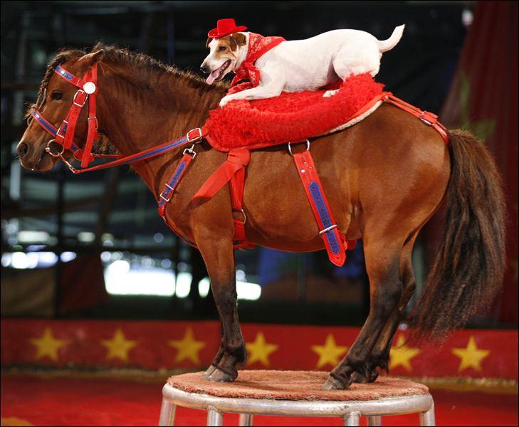 Dog-and-pony-show.jpg