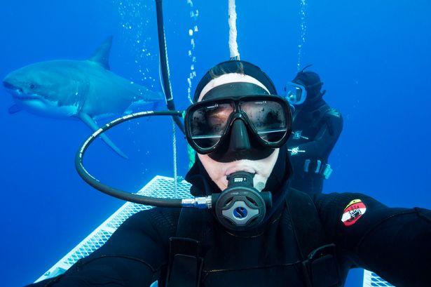 Great-white-sharks-Guadalupe-Island.jpg