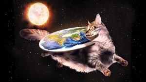 catdisc.jpg