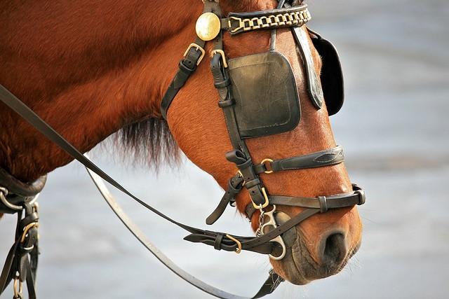 Horse-Blinders.jpg