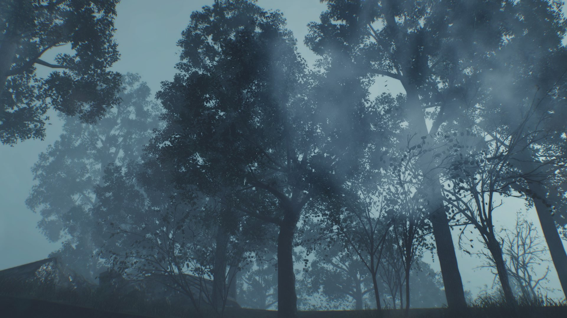 TEW trees 1.jpg
