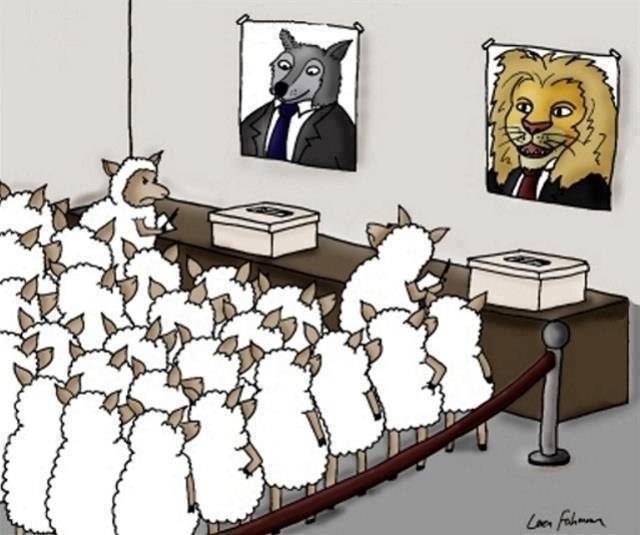 Sheep-On-Voting-For-a-Lion-Or-a-Wolf-On-Election-Day.jpg
