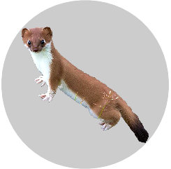 Badge_Weasel.png
