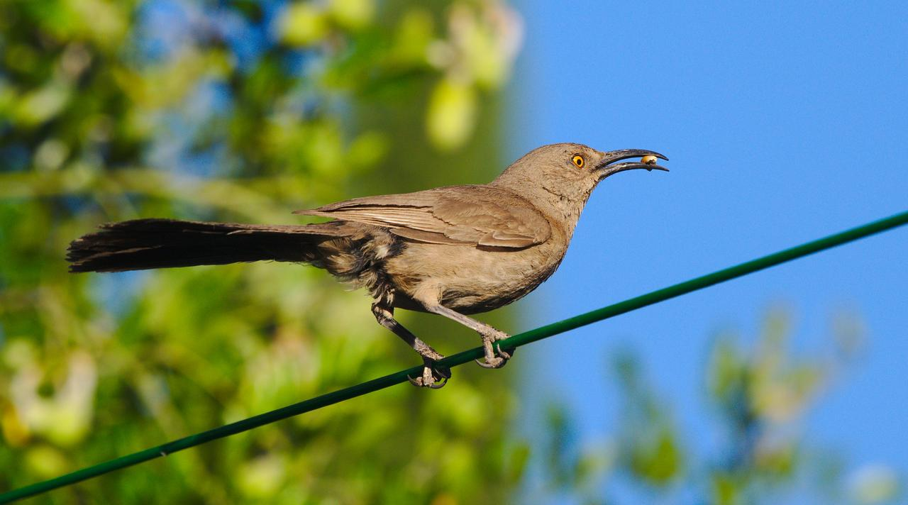 bird-on-green-wire.jpg
