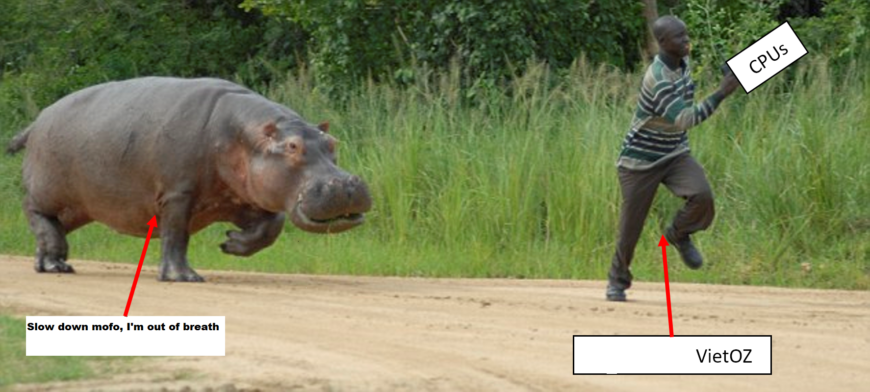 342332_CPU_Hippo.png
