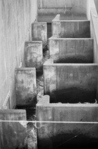 Fish Ladder II.jpg