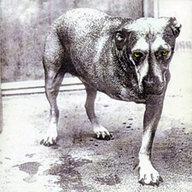 trilegdog